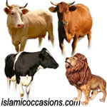 Islam and Friends: Three Cows (Friend Story)